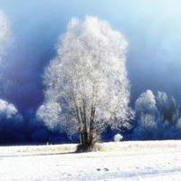 冬天唯美风景雪花头像图片7