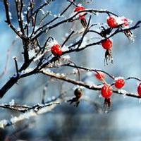 冬天唯美风景雪花头像图片9