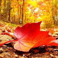 秋天落�~��感