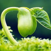 植物发芽唯美