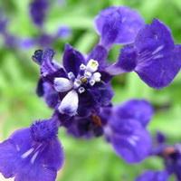紫�_�m